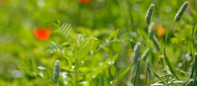 Agricola Doria – La campagna olearia 2014
